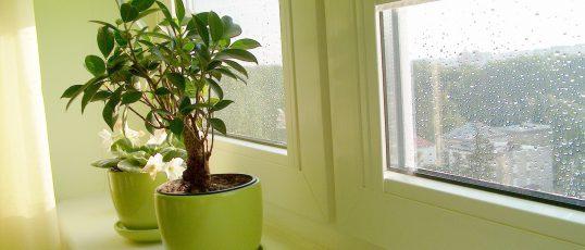 Vackra fönster skapar ett ljust hem